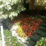 Giardino in Roncello